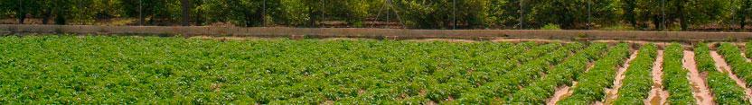 Conservas Vegetales de la Huerta