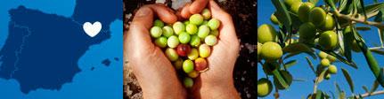 Aceite de oliva virgen extra Olisoleil - origen - sugerencia de presentación