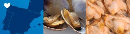 Almejas premium Espinaler - Sugerencia de presentación y origen