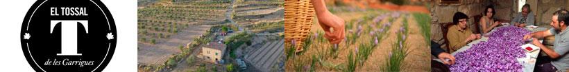 Azafrán el Tossal de les Garrigues en Sabority