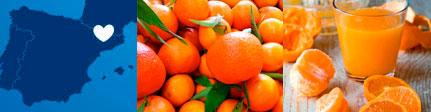 Zumo de Mandarina de Cal Valls - origen