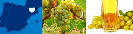 Zumo ecológico de uva blanca Cal Valls, origen presentación