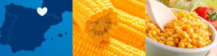 Origen sugerencia de presentación maíz dulce ecológico Monjardín