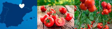 Origen sugerencia de presentación de tomate ecológico Monjardín