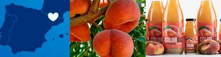 Ecolorgic, zumo de paraguayos ecológico y gourmet, origen